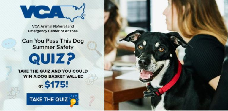 VCA Animal Dog Summer Safety Quiz Sweepstakes